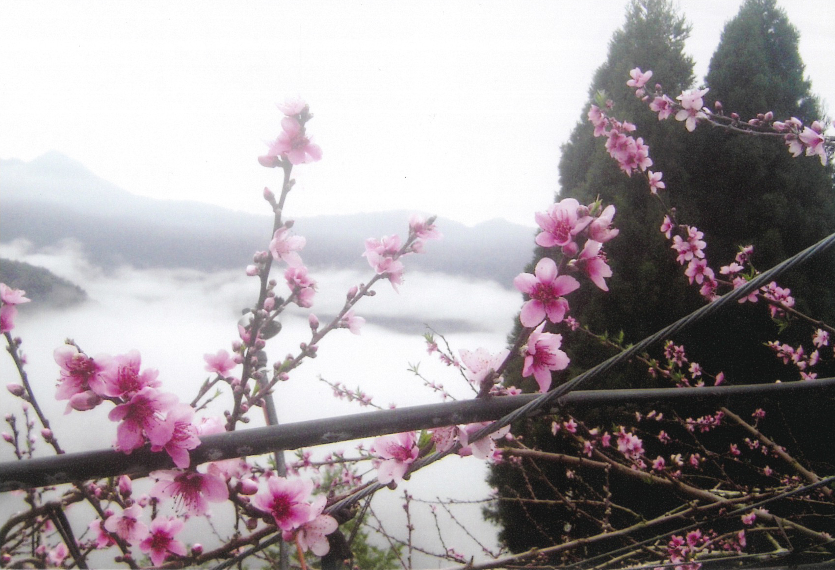 flowers-and-clouds-in-la-la-shan